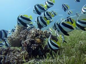 Diving in Dahab 13