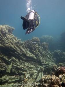 Diving in Dahab 14