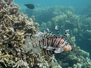 Diving in Dahab 16