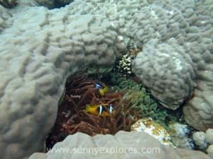 Diving in Dahab 17