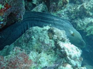 Diving in Dahab 21