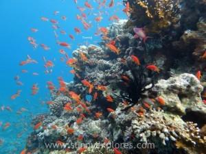 Diving in Dahab 24