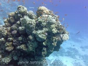 Diving in Dahab 5