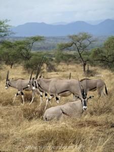 Kenya 6