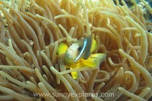 Sunny explores Diving Dahab