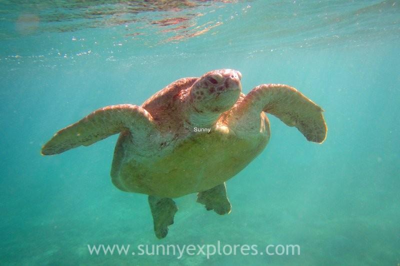 Sunny explores Marsa Alam 12