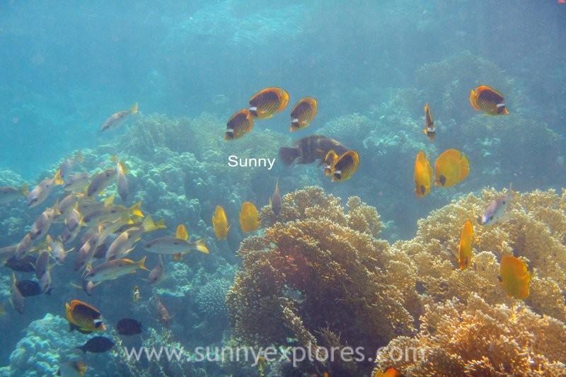 Sunny explores Marsa Alam 18