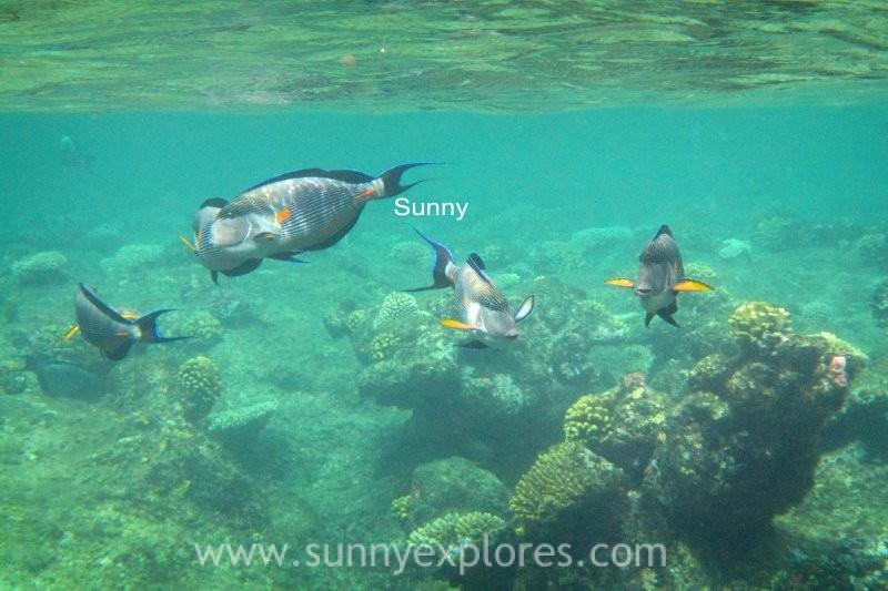 Sunny explores Marsa Alam 19