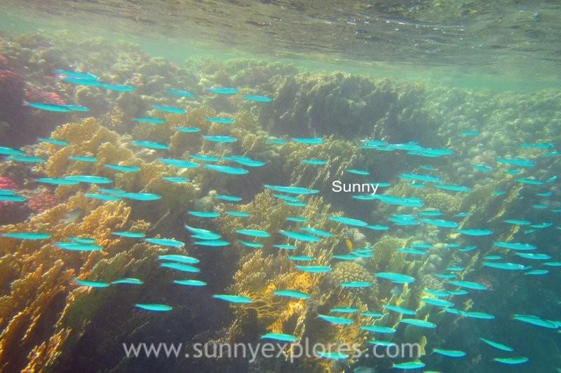 Sunny explores Marsa Alam 20
