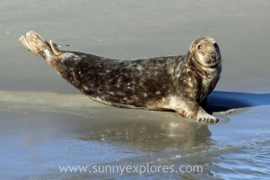 Sunnyexplores Ameland 12