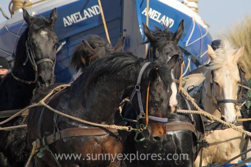 Sunnyexplores Ameland 2