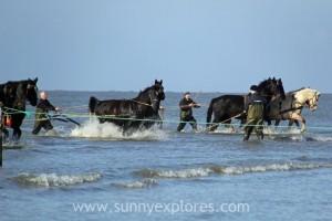 Sunnyexplores Ameland 4