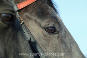 Sunnyexplores Ameland 5