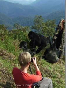 Sunnyexplores Gorilla (1)