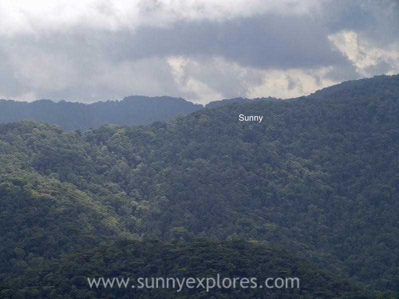 Sunnyexplores Gorilla (14)