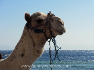 Sunnexplores Dahab 19