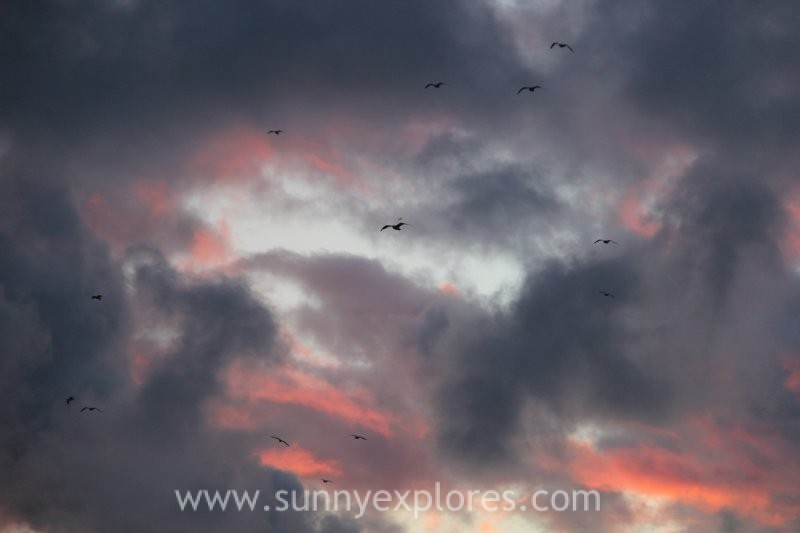 Sunnyexplores Vlie sunrise (1)