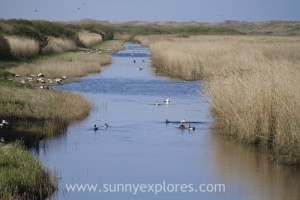 Sunnyexplores Vlieland 2016 (14)