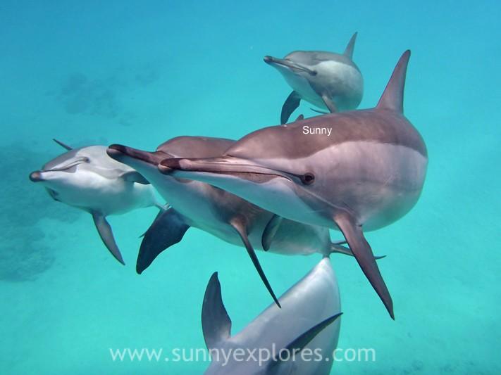 Sunnyexplores dolphins (1)