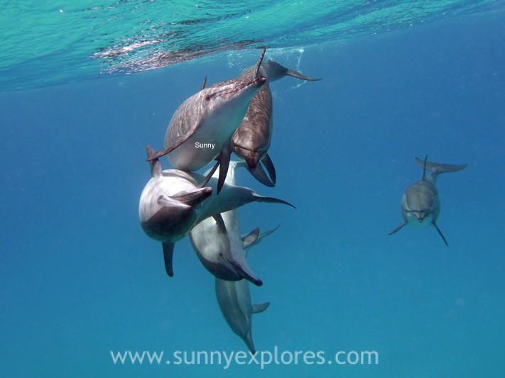 Sunnyexplores dolphins (3)
