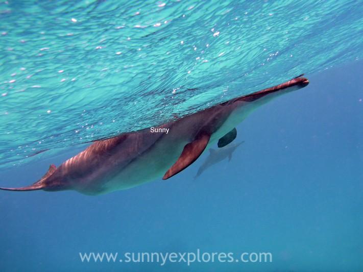 Sunnyexplores dolphins (4)