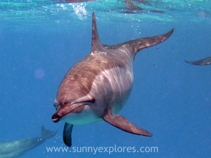 Sunnyexplores dolphins (6)