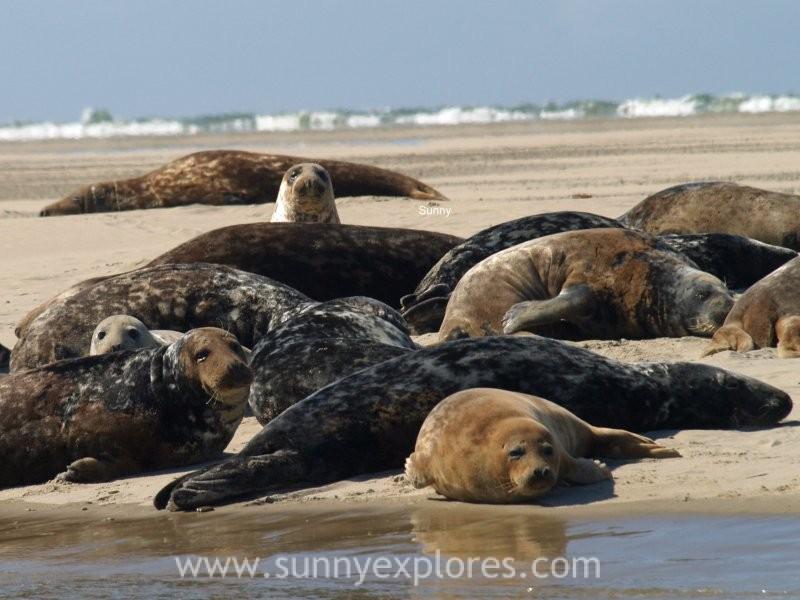 Sunnyexplores seals (1)