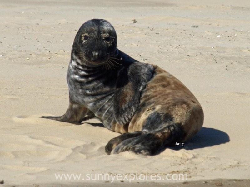 Sunnyexplores seals (11)