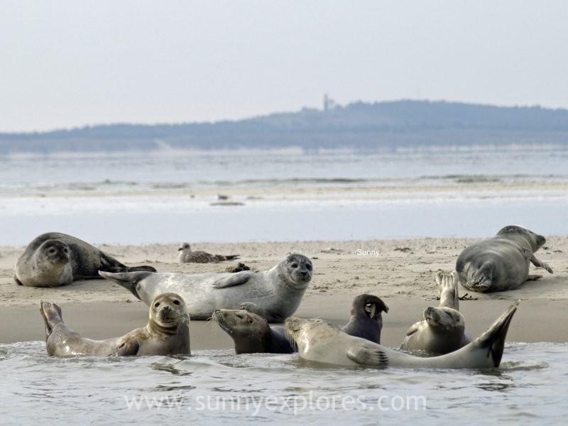 Sunnyexplores seals (2)