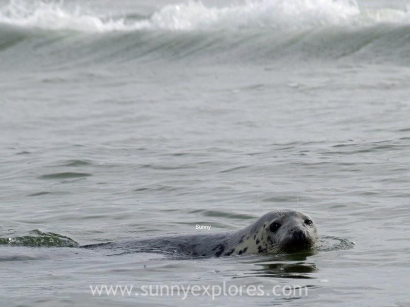 Sunnyexplores seals (3)
