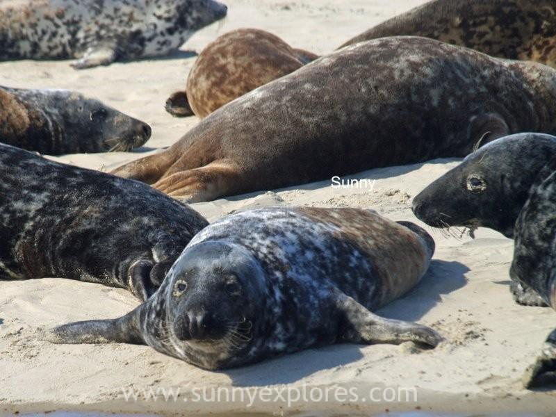 Sunnyexplores seals (6)