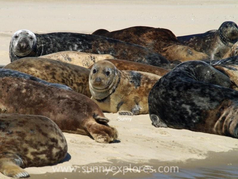 Sunnyexplores seals (7)