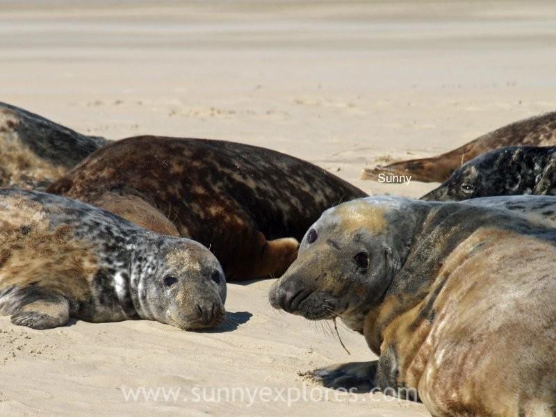 Sunnyexplores seals (8)