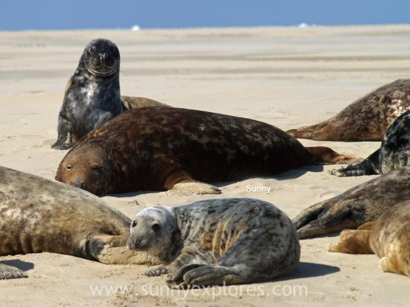 Sunnyexplores seals (9)