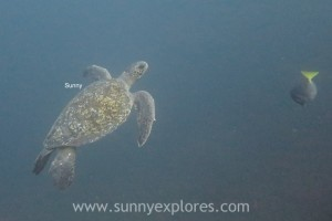 Sunnyexplores Gordon Rocks 4kopie
