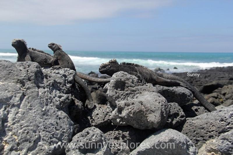 Sunnyexplores Galapagos 1kopie