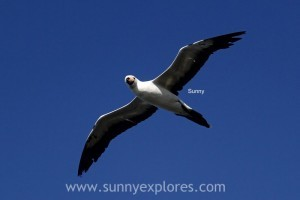 Sunnyexplores Galapagos 20kopie
