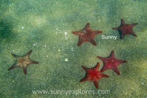 Sunnyexplores Galapagos 22