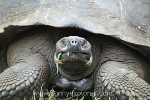 Sunnyexplores Galapagos 4kopie