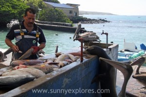 Sunnyexplores Galapagos 5kopie