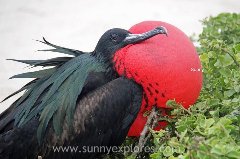 Sunnyexplores Galapagos 6kopie