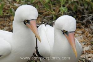 Sunnyexplores Galapagos 7kopie