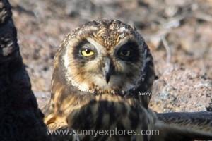 Sunnyexplores Galapagos 8kopie