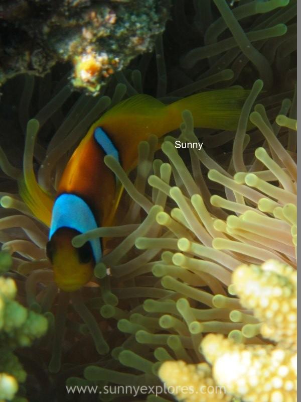 Sunnyexplores Nemo (10)kopie