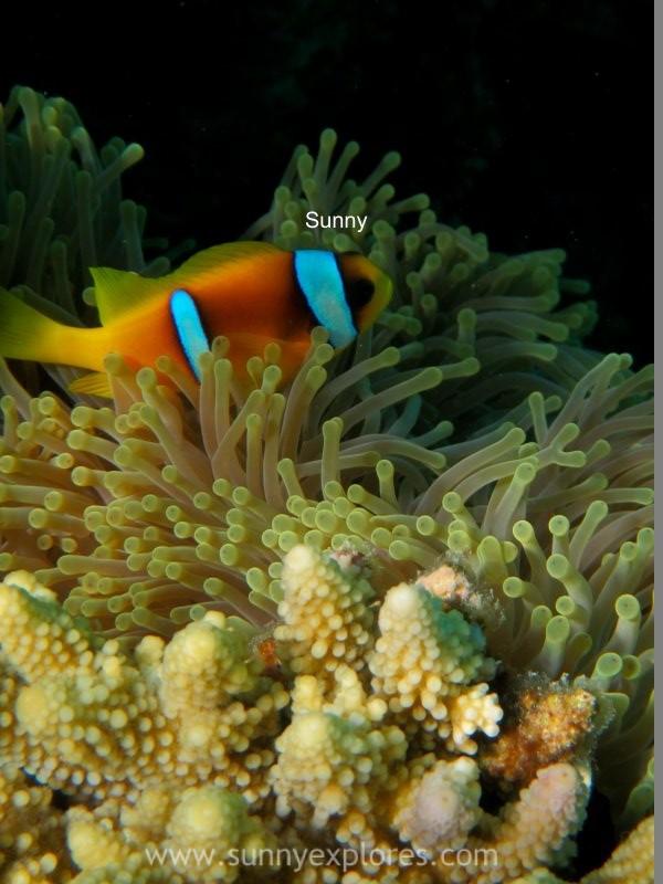 Sunnyexplores Nemo (11)kopie