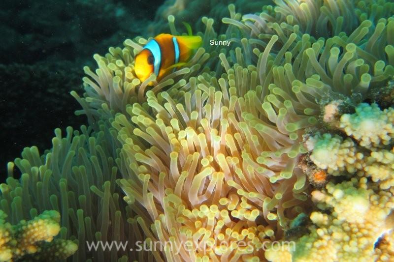 Sunnyexplores Nemo (1)kopie