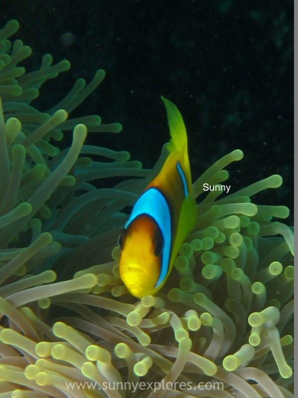 Sunnyexplores Nemo (2)kopie
