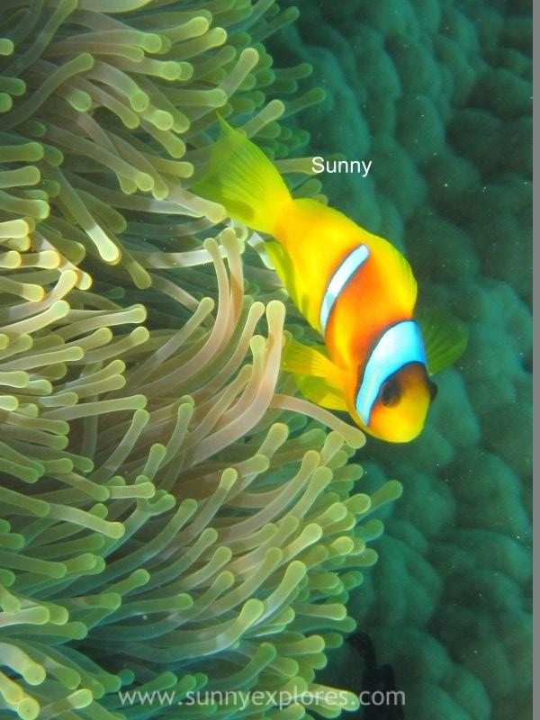 Sunnyexplores Nemo (4)kopie