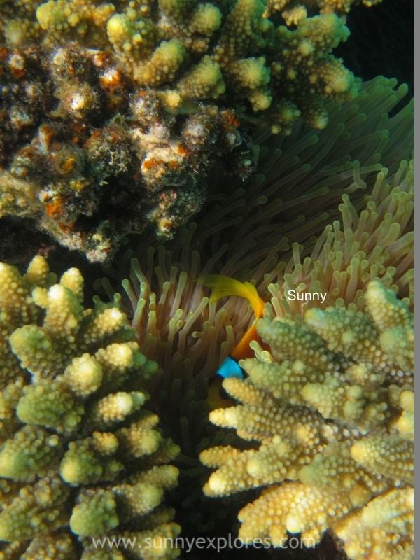 Sunnyexplores Nemo (5)kopie