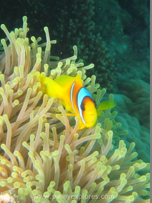 Sunnyexplores Nemo (6)kopie